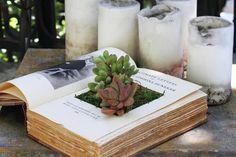Como plantar suculentas em um livro