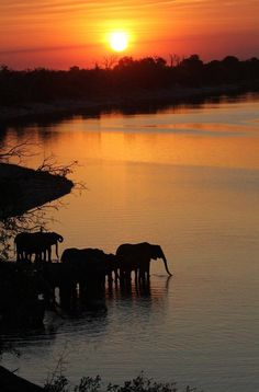 Chobe National Park is one of the great wildlife destinations of Africa. Famed for its massive elephants and enormous elephant population, Chobe, which encompasses nearly sq km, is itself the size of a small country and an important epicentre of Bo Beautiful Sunset, Beautiful World, Beautiful Places, Beautiful Beautiful, Beautiful Scenery, Amazing Places, Chobe National Park, Parque Natural, Foto Poster