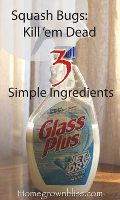 """Squash Bug Killer- I just used this in the garden today and it worked out great. No- it's not """"Glass Plus."""""""