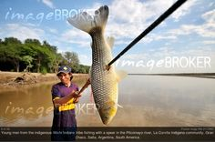 Photographer of the Month September 2012: Florian Kopp (RM 2117607). Young man from the indigenous Wichi Indians tribe fishing with a spear in the Pilcomayo river, La Curvita Indigena community, Gran Chaco, Salta, Argentina, South America