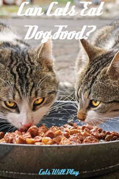 "If you live in a multi-species household, at some point you have probably wondered, ""can cats eat dog food?"" In this article, we will answer that question! Hod Dog, Can Dogs Eat, Outdoor Cats, Dog Eating, Cat Health, Cat Food, Dog Bowls, Dog Food Recipes, Pup"