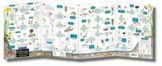 'Freshwater Name Trail' These all-weather fold-out reference guides are perfect for those seeking to learn more about UK species. Used by children, walkers and professionals alike.  This guide is ideal for pond dipping, helping you to identify many of the invertebrates found in freshwater.