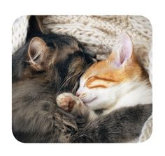 Are you a snuggle bug cat like these two? Take this quiz to find out!