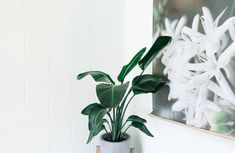If you want to make a bold statement with a floor-length indoor plant, Rubber plant is the perfect fit. These magnificent plants are one of the most popular. Johor Bahru, Key Diy, Eco Friendly House, Best Interior Design, Interior Ideas, Ceramic Vase, Home Improvement Projects, Houseplants, Indoor Plants