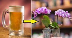 Orchids, Gardening, Rose, Floral, Flowers, Diy, Decor, Plants, Cactus