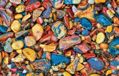 """TYWKIWDBI (""""Tai-Wiki-Widbee""""): Beach Gravel from """"Rainforest Country"""" by Kaisa and Stanley Breeden: an Australian rainforest... so many incredible images not enhanced in any way"""