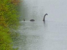 """The Chippewa River in Eau Claire, Wisconsin is now home to a sculpture of the Loch Ness monster, or 'Nessie,' but it's a local mystery how it ended up there. Says resident Marie J., """"It was simply there one day."""""""