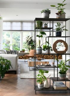 Houseplants anywhere in the house: this living room. Big and small plants - - Houseplants anywhere in the house: this living room. Big and small plants balcony Lights Zimmerpflanzen überall im Haus: dieses Wohnzimmer. Decor, Interior, Home Decor, House Interior, Apartment Decor, Plant Shelves, House Plants Decor, Living Room Plants, Home And Living