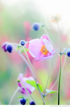 Colors | Nature by loracia