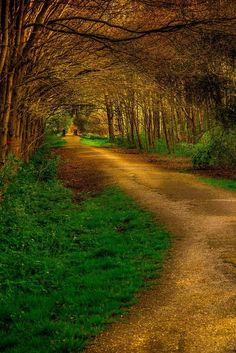 Forest, Florin Gabriel Viisoreanu