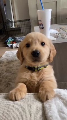 Super Cute Puppies, Baby Animals Super Cute, Cute Baby Dogs, Cute Little Puppies, Cute Funny Dogs, Cute Dogs And Puppies, Cute Little Animals, Cute Funny Animals, Hilarious Sayings
