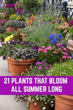 patio plants Here is a wide selection of beautiful summer plants which bloom profusely throughout the season without much pampering from you. Garden Shrubs, Patio Plants, Outdoor Plants, Outdoor Gardens, Shade Garden, Potted Plants, Garden Yard Ideas, Garden Projects, Lawn And Garden