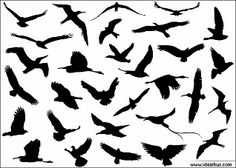 30 verschiedene Flying Birds