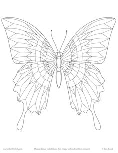 Ben Kwok Template - Ornation Creation FB Group Fabric Butterfly, Butterfly Drawing, Insect Coloring Pages, Butterfly Black And White, Butterfly Illustration, Learn Art, Bird Drawings, Stuffed Animal Patterns, Line Drawing