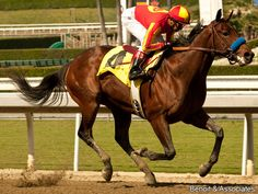 Secret Circle(2009)Eddington- Ragtime Hope By Dixieland Band. 3x5 To Northern Dancer. 16 Starts 8 Wins 6 Seconds 1 Third. $3,670,790. Won 2013 BC Sprint(G1).