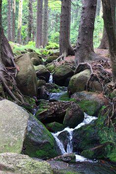 """""""Auf dem Brocken"""" Harz mountains Germany; Randy Schulte"""