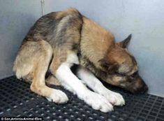 Dieser Hund wurde so lange gequält, bis er glaubte, sterben zu müssen. Dann geschah ein Wunder.