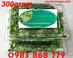 Rau chùm ngây cải thiện tốt sức khỏe và sắc đẹp http://caynongaydat.vn/ - http://caychumngay.com - http://caychumngayvn.com