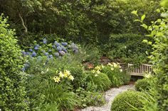 garden design Along the way, Michele sought the advice of local garden designer Amy Pallenberg, and Nantucket Cottage, Creeping Phlox, Black Eyed Susan, Garden Cottage, Flowers Perennials, Ornamental Grasses, Day Lilies, Back Gardens, Along The Way