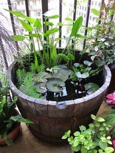 Build a Container Water Garden to Cure Your Pond Cravings Ponds Backyard, Mini Garden, Plants, Small Water Gardens, Patio Garden, Diy Garden, Mini Pond, Water Features In The Garden, Garden Projects