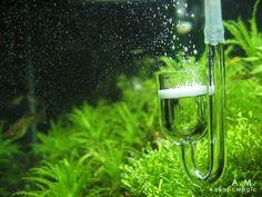 Aquatic Magic - Aquarium Plants, Moss, Pots, Aquarium Fish, Prawns and Aquarium Equipments
