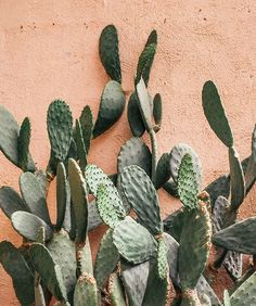 green thumb | prickly pear cactus - via Justina Blakeney