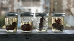 American Horror Story Inspired DIY Preserved Organs DIY - Basement Horrors in Mason Jars - Great Craft Project for Halloween
