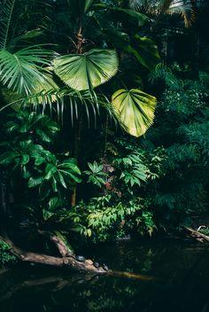 Hortus Botanicus   ingeborgklara   Flickr