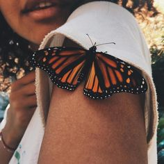 Imagem de butterfly, photography, and aesthetic - Schmetterling
