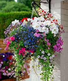 Using Hanging Flower Basket Ideas is a very good option if you want to make your home more appealing. Hanging Flower Basket Ideas - Using Hanging Flower Basket Ideas is a very good option if you want to make your home more appealing. Plants For Hanging Baskets, Hanging Flowers, Hanging Planters, Fall Planters, Hanging Plants Outdoor, Trailing Flowers, Container Plants, Container Gardening, Succulent Containers