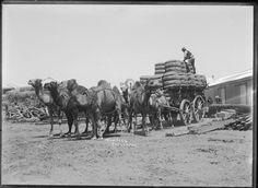 008749PD: Wool team, Carnarvon, ca 1911 http://encore.slwa.wa.gov.au/iii/encore/record/C__Rb2940930?lang=eng