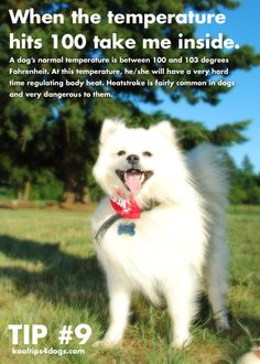 Dog Health Tip #9  A dog's normal temperature is between 100 and 103 degrees Fahrenheit. At this temperature, he/she will have a very hard time regulating body heat. Heatstroke is fairly common in dogs and very dangerous to them.