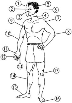 Arbeitsblatt: Die Körperteile