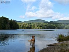 Our Golden Retriever Charlie wading into Colton Pond near Killington, Vermont #perfectweight #sponsored