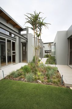 A well designed contemporary courtyard to allow for natural light to permeate throughout the whole house. Glass Structure, Mid-century Modern, Contemporary, Courtyards, Natural Light, Modern Architecture, Sustainability, Sidewalk, Mid Century