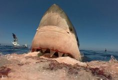 This picture was taken from a GoPro video at Guadalupe this 2015  Photo: Joel Ibarra