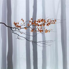 Waiting for Winter by Martin Rak