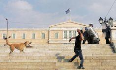 Loukanikos The Greek Riot Dog Athenian Democracy, Street Dogs, Stunning Photography, Four Legged, Destruction, Athens, Louvre, Travel, Legs