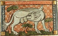 A wolf or dog licking its genitals from an unknown source