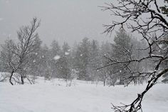Lumisade Inarissa. Snow, Outdoor, Outdoors, Outdoor Games, The Great Outdoors, Eyes, Let It Snow
