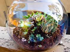 DIY instructions on how to make your own succulent garden in a fish bowl! Great for those of us who don't have a green thumb