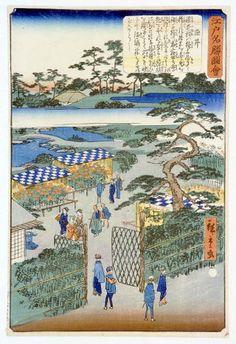 二代 広重 江戸名勝図會 染井 染井はサクラの品種ソメイヨシノにその名を残していますが、江戸時代には巣鴨、団子坂などと並んで植木屋が多く集まり、花の名所として知られていました。特に伊兵衛三之丞(1650年前後)がツツジの野生種を全国から集めて品種改良を行うようになって以来、ツツジの名所として有名になりました。生け垣で仕切られた植木屋の庭や、開かれた門を入って、大掛かりにしつらえられた満開の菊花壇を見物する人々の姿など、当時の染井のようすがよくわかります。囲みの中に書かれているのは主にツツジの話です。 Edo Period, Woodblock Print, Ghibli, Japanese Art, Landscape, Nature, Prints, Painting, Japanese Painting