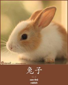 兔子 - tùzǐ - con thỏ - rabbit