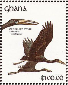 African Openbill stork  (Anastomus lamelligerus). Postage stamp from Ghana, circa 1991