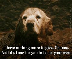 Homeward Bound taught us that even when things seem hopeless… | 25 Movies From The '90s That Taught Us Life's Most Important Lessons