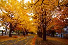 Discover the world through photos. Places To See, University, Country Roads, Japan, World, Photography, Hokkaido, Photograph, Fotografie