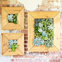 Build a space-saving planter that turns succulent plants into wall art. Lowe& Build a space-saving p Vertical Succulent Gardens, Succulent Wall Art, Succulent Planter Diy, Hanging Succulents, Plant Wall, Hanging Plants, Succulents Garden, Succulent Plants, Hanging Gardens