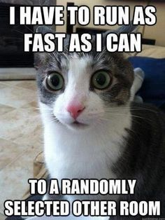 Just keep running!  #cat #humor #cats #funny =^..^= www.zazzle.com/kittyprettygifts