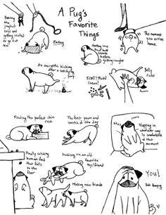 These are a few of my pug's favorite things!