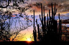 Dica de Destino. Parque Nacional Serra da Capivara apresenta belas imagens como essa em Foto de André Pessoa. Vale a pena conferir!